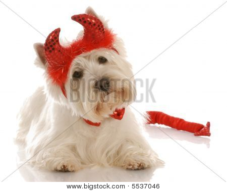 Westie Dressed As A Devil