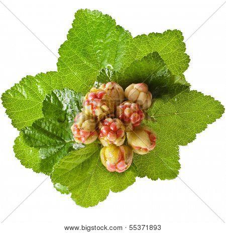 fresh cloudberry ( Rubus chamaemorus) isolated on white background