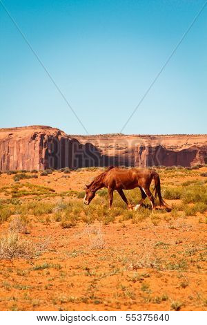 Brown wild horse in a desert at monument Valley, Arizona, USA