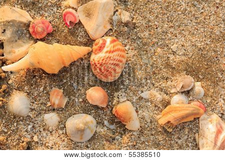 Ocean Shell Background .