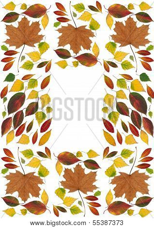arrangement of multicolor various leaves