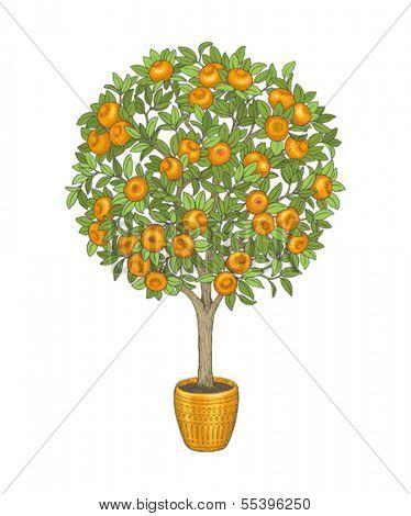 Mandarin tree in flowerpot, hand drawn color illustration.
