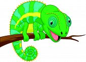 picture of chameleon  - Vector illustration of Cute chameleon cartoon isolated on white background - JPG