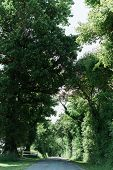 pic of tree lined street  - Long street lined with large green trees in the French Countryside - JPG