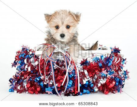 Red, White And Blue Puppy