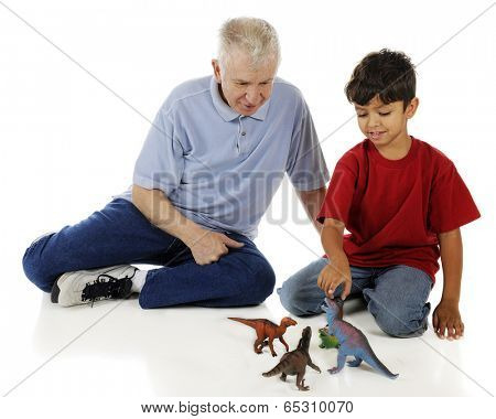 An adorable preschooler showing his grandpa his collection of toy dinosaurs.  On a white background.