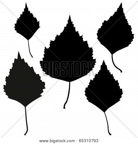 Set of vector black birch leaves outline