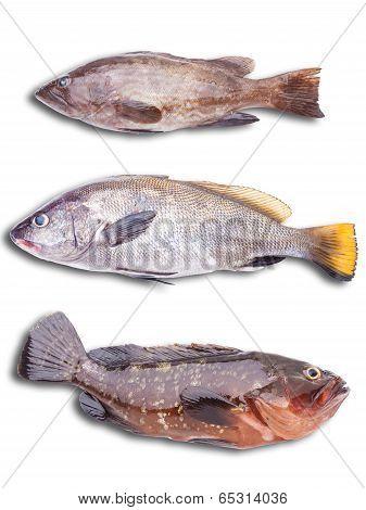 Sea Fish On The White Bacground