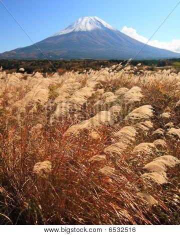 Mt. Fuji In Fall