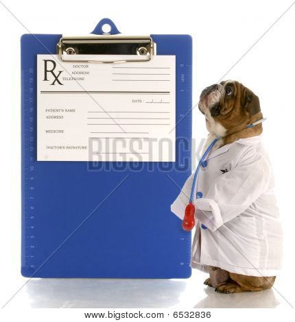 Bulldog Doctor With Prescription