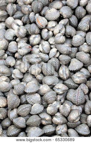 Scallop Or Cockles In Seafood Market.