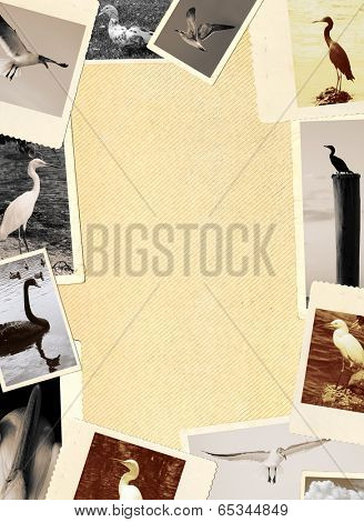 Blank page of a vintage photo album with many photo frames showing various birds