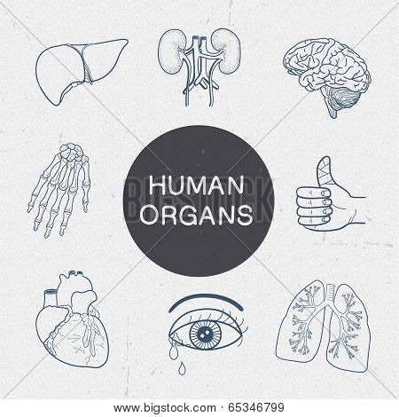 Human organs collection.