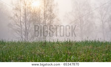 Moist Grass, Sunrise Silhouette Trees