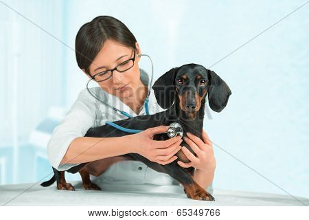 Woman Vet Listens A Dog