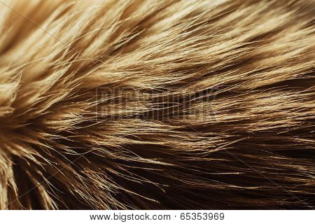 Macro Close Up On A Cat's Fur