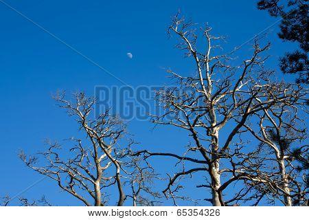 Beatiful Blue Sky
