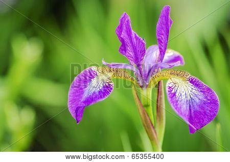 Poetic Purple Flower