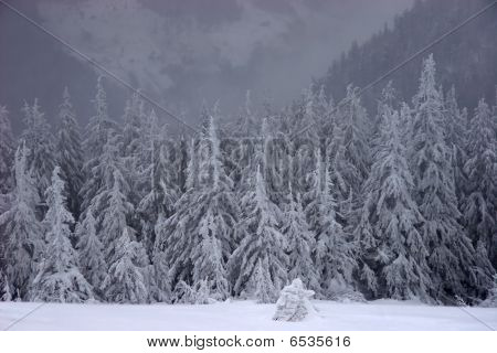 Winter Fairy Forest Under A Snowfall