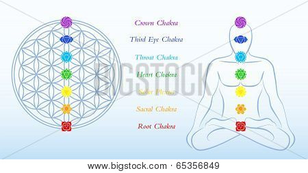 Flower of Life Description Chakras Man