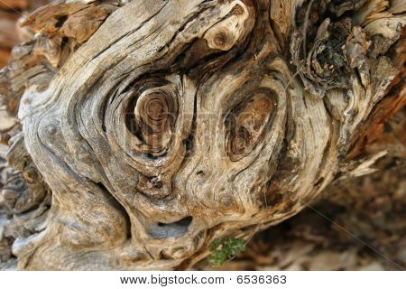 Face of a Tree