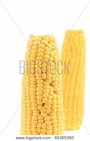 Close up of fresh corn ear.