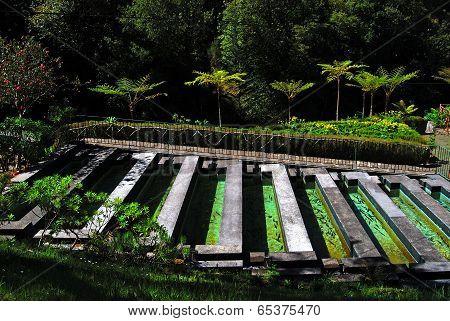 Trout farm at Ribeiro Frio, Madeira, Portugal