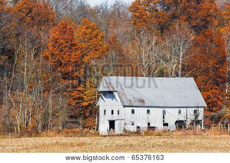 Whtie Barn And Autumn Leaves