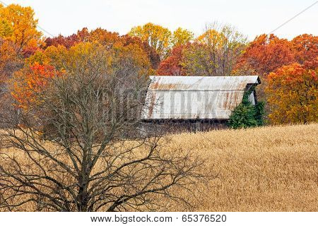 Autumn Barn And Tree In Cornfield