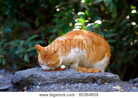 Street cat eating food on rock