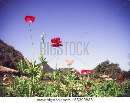 Rad Flowers With Blue Sky