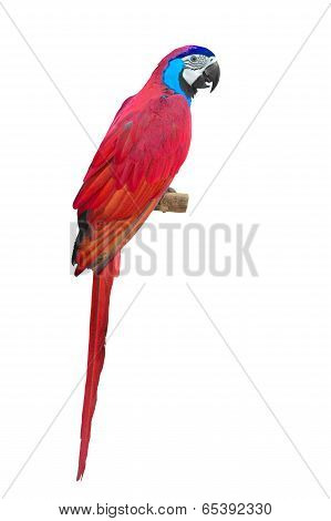 Red Macaw Aviary