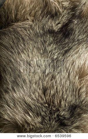 Background - Beautiful Polar Fox Fur