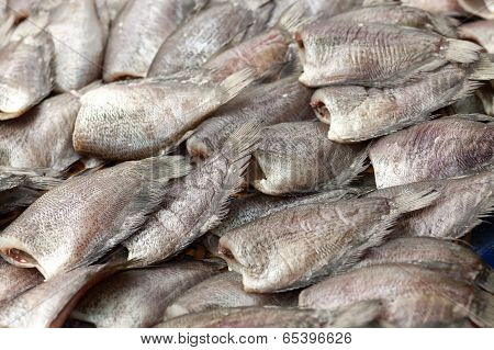 Salted Gourami Fish