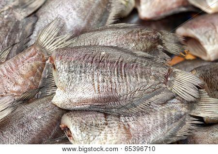 Gourami Fish Background