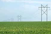 image of hayfield  - A long line of power poles descends into the green of a Spring hayfield.