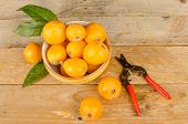 pic of loquat  - Healthy loquats in a bowl on a wooden table - JPG