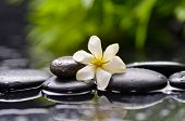 picture of gardenia  - gardenia flower on pebbles with green on plant  - JPG