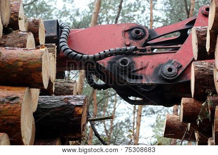 Timber crane and pine trunks