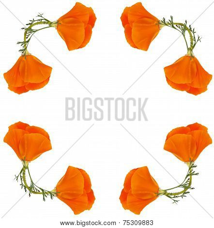Frame Of Flowers Eschscholzia Californica