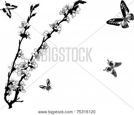 illustration with cherry tree flowers and butterflies isolated on white background