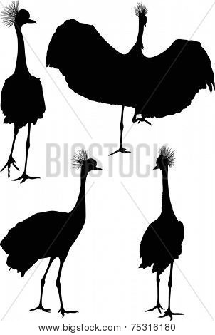 illustration with cranes isolated on white background