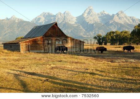 Barn And Grand Teton National Park