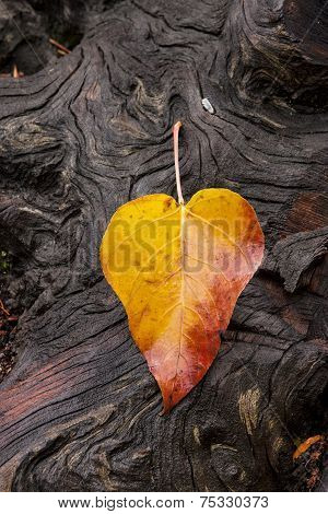 Leaf On Groved, Weathered Log.