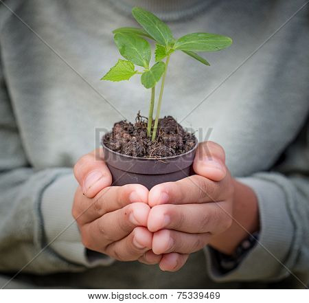 Young  Boy Hands Hold Pot Of Plant