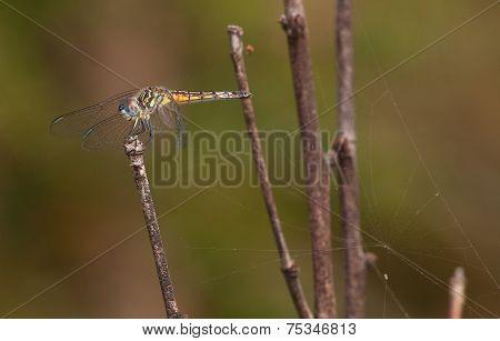 Spider Nearby