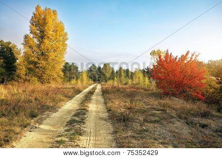 Autumn. Forest In Autumn. Autumn Trees And Leaves In Sun Light. Autumn Scene