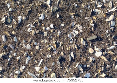 Background Sand With Cockleshells