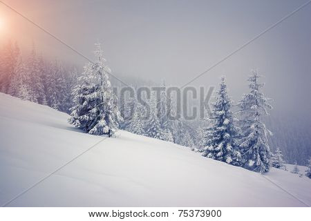 Fantastic landscape glowing by sunlight. Dramatic wintry scene. Carpathian, Ukraine, Europe. Beauty world. Retro filter. Instagram toning effect. Happy New Year!