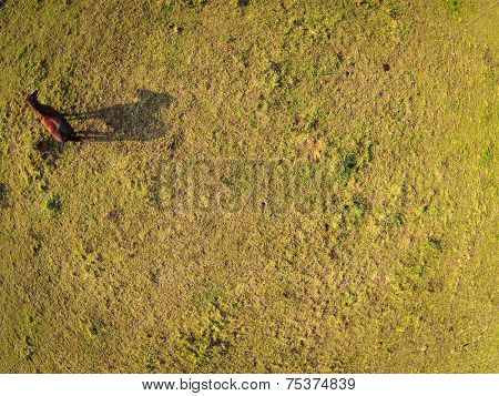 Aerial view over a pasture with a horse casting a shadow